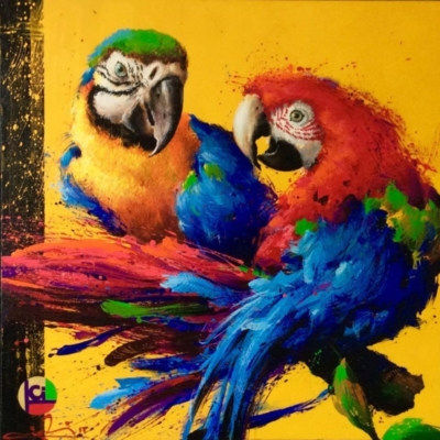 Igli Jorgo Parrots