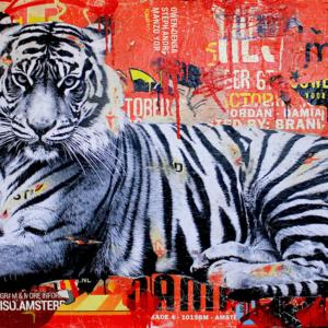 MIchiel_folkers_tiger2